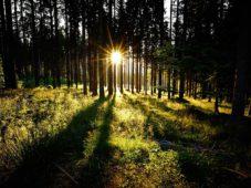 06.07.2014: Sonnenuntergang im Wald n‰he Lindberg